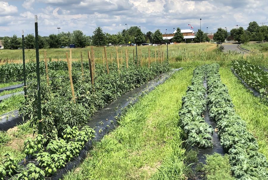 Pulse café farm, Hadley MA