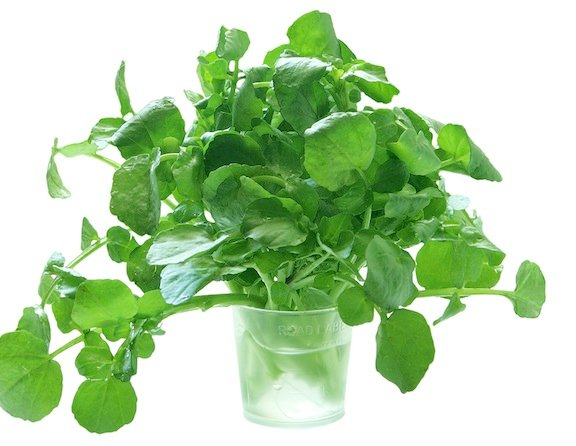 Watercress in glass