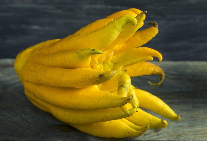 Yellow Buddhas Hand Citrus Fruit