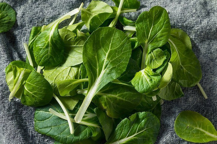 Tatsoi - Asian leafy green