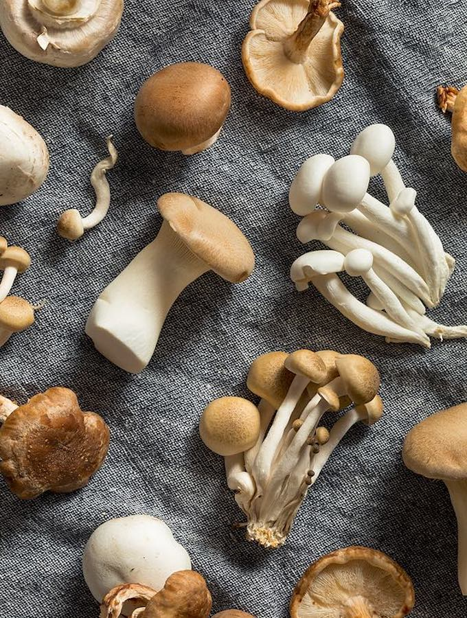 mixed culinary mushroom varieties