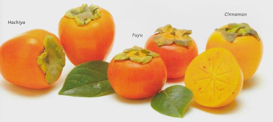 persimmon varieties