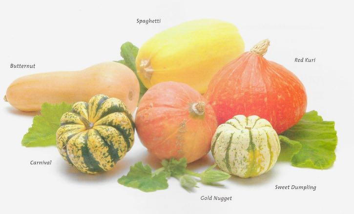 Winter Squash varieties including butternut, etc.
