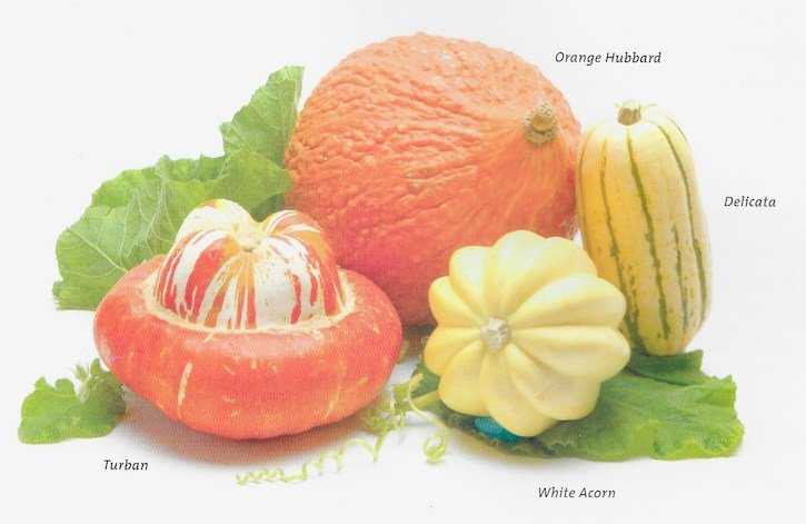 Squash varieties available in fall and winter
