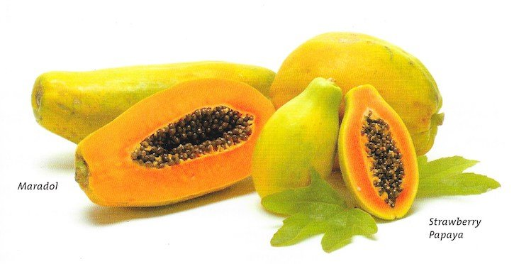 papaya varieties