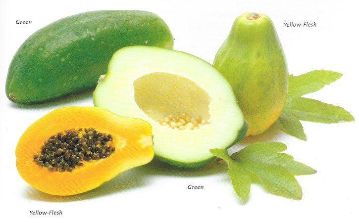 papaya varieties, including green papaya