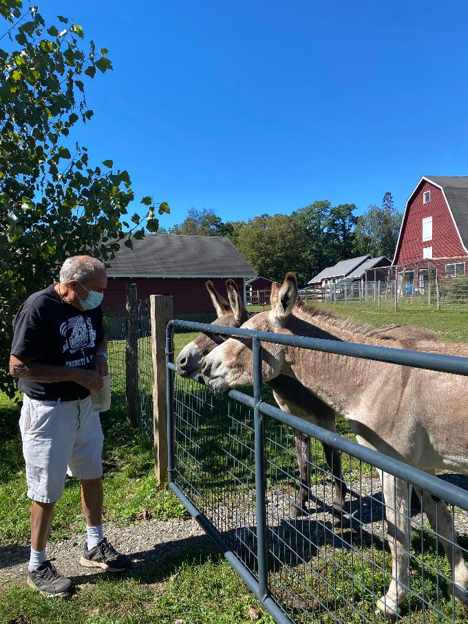 Donkeys at the Farm Sanctuary